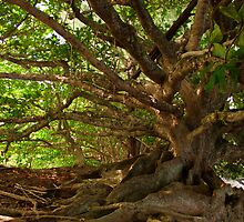 Branches And Roots by James Eddy