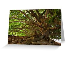 Branches And Roots Greeting Card