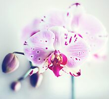 Orchids by edarlingphoto