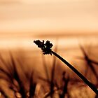 Silhouette of Sea Grass by Marianne Ellis