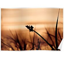 Silhouette of Sea Grass Poster