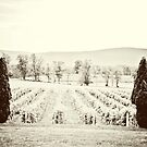 Breaux Vineyards by edarlingphoto