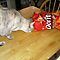 CAT SNACKING - FUN IMAGES