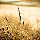 Close up of Wheat Germ Grass by Marianne Ellis