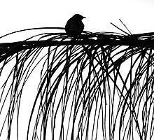 Bird in Silhouette on white by Melania