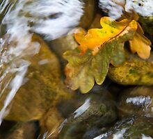 Leaves in the stream 1 by BeardyGit