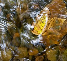 Leaves in the stream 2 by BeardyGit