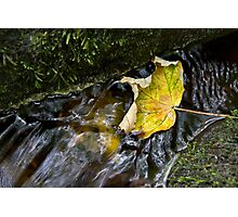Leaves in the stream 3 Photographic Print