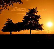 Golden Trees by Theshinyavenger