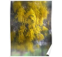 Loaded with Wattle Poster