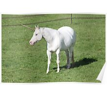 A Real Live Unicorn! Poster