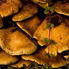 Fungus Amoung-Us by Melissa Seaback