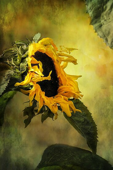 Sunflower, by Irene  Burdell