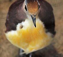 Birdy by Paul Tambunan