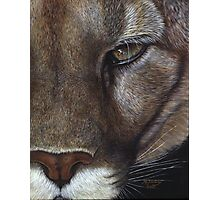 Cougar face Photographic Print