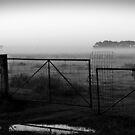 Foggy Paddock by Julie Sleeman