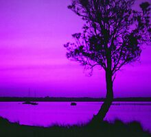 Sunset in Purple and Pink by Michael John