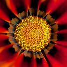 Floral fireworks by Rachael Talibart