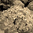 Vintage Hydrangea by Rewards4life