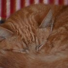 do not disturb - cat sleeping by anneisabella