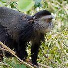 Monkey by Brad Francis