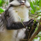 Copper-Tail Monkey  by Brad Francis