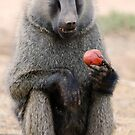 Baboon by Brad Francis