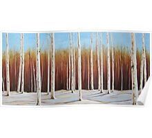 Birch 2, Collingwood, Ontario 60x30 Acrylic Poster
