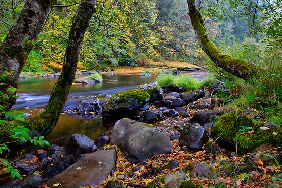 A Window To Fall ~ Lake Creek ~ by Charles & Patricia   Harkins ~ Picture Oregon