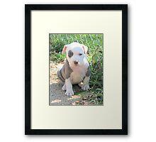 I'm So Cute! Framed Print