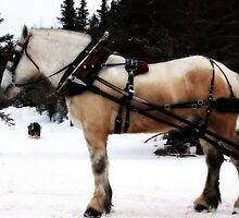 Sleigh Ride by kflanary