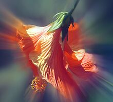 Hibiscus Fan by Elaine  Manley