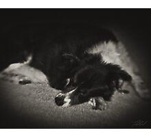Sleeping Dog Photographic Print
