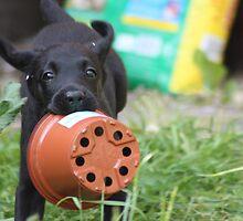 Puppy Pic Card by Lynn Ede