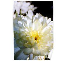 White Flower Card Poster