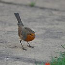 The Little Red Robin Went Bob-Bob-Bobbing Along.. by The-Stranger