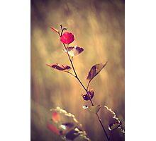 Summer 2015 Photographic Print