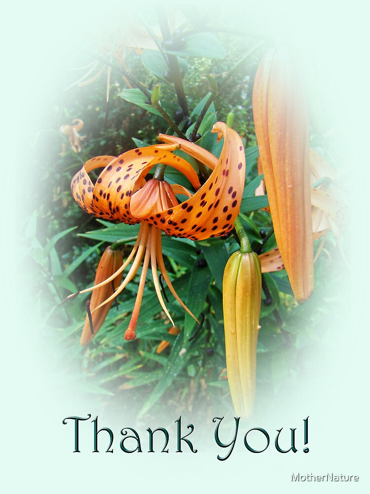 Thank You Card - Turks Cap Lilies by MotherNature