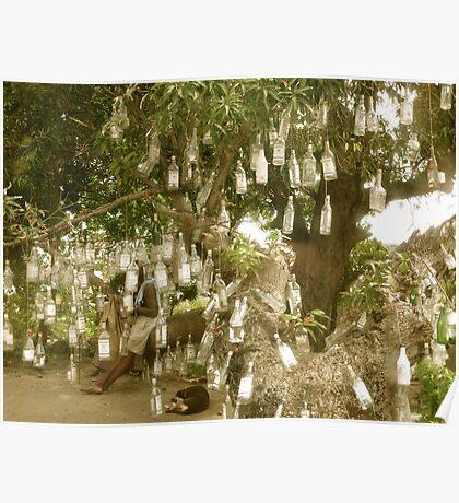Bottle Tree - St. Kitts, Eastern Caribbean Poster