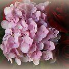 Beautiful Flowers by kkphoto1