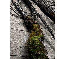 Living Stone - Penrhyn Castle Photographic Print