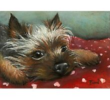 Yorkie and hearts Photographic Print