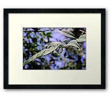 Lingering Raindrops Framed Print