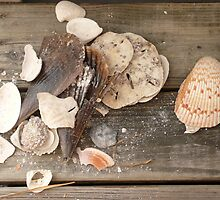Found Shells -Florida by Jenny Hambleton