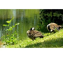 Hanging Out By the Little Green Pond Photographic Print