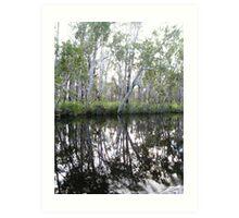Noosa River Everglades - Reflections 1 Art Print