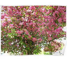 Bubbling Blossoms Poster