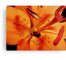 Extreme Close-up Of Lily Canvas Print