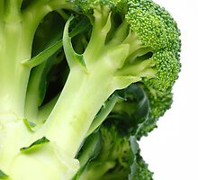 Broccoli  by Gaspar Avila
