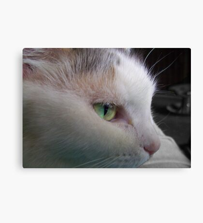 A Cat's Name Canvas Print